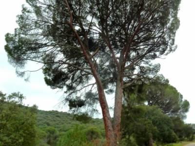 Garganta de Picadas - Vía Verde del Alberche;senderismo y excursiones; senderos de madrid;